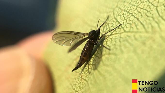 Como quitar los mosquitos de la tierra de las plantas 1